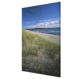 J.T. Chessman Provincial Park, Dune grass Canvas Print