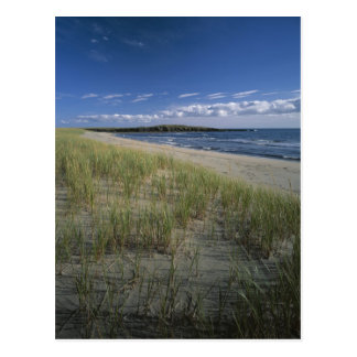 J.T. Chessman Provincial Park, Dune grass Postcard