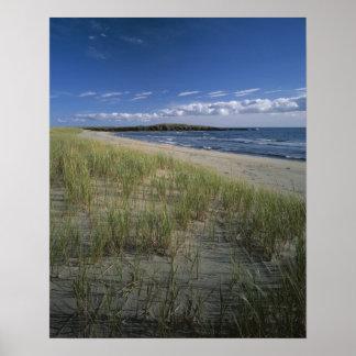 J.T. Chessman Provincial Park, Dune grass Poster