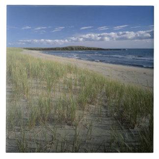 J.T. Chessman Provincial Park, Dune grass Tile