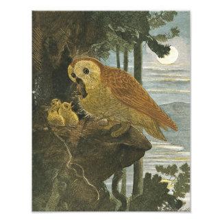 J Zwecker Mother Owl Babies 1883 Repro Print Photo Print