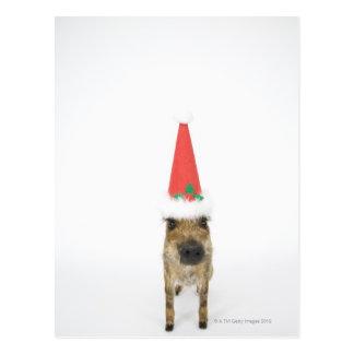 Jabalí con el gorra del navidad postal