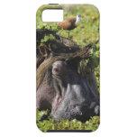 Jacana que se coloca en el hipopótamo iPhone 5 carcasas