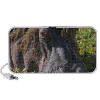 Jacana que se coloca en el hipopótamo (Hippopotamu Portátil Altavoz