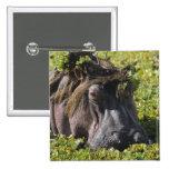 Jacana que se coloca en el hipopótamo (Hippopotamu Pin Cuadrada 5 Cm