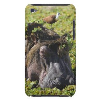 Jacana standing on hippo's (Hippopotamus iPod Case-Mate Case
