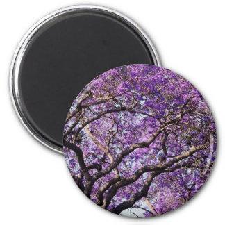 Jacaranda tree in spring bloom flowers 2 inch round magnet