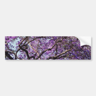 Jacaranda tree in spring bloom flowers car bumper sticker