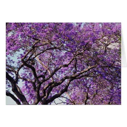 Jacaranda tree in spring bloom flowers card