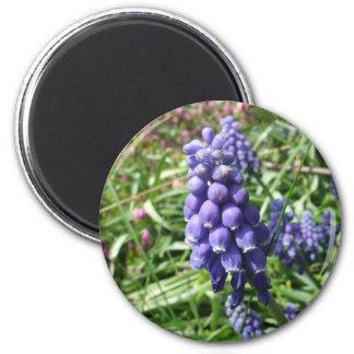 jacinto de uva iman para frigorífico