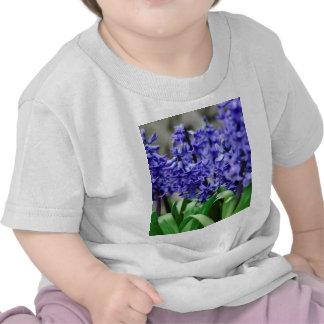 Jacinto Camisetas