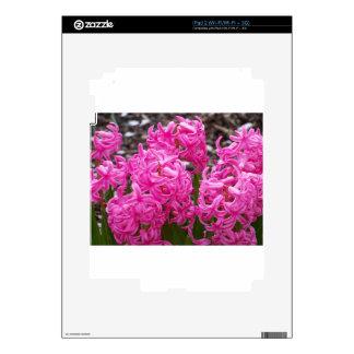 Jacinto rosado calcomanías para iPad 2