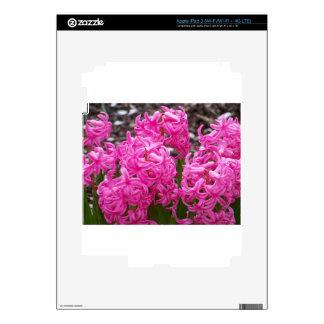 Jacinto rosado iPad 3 pegatina skin