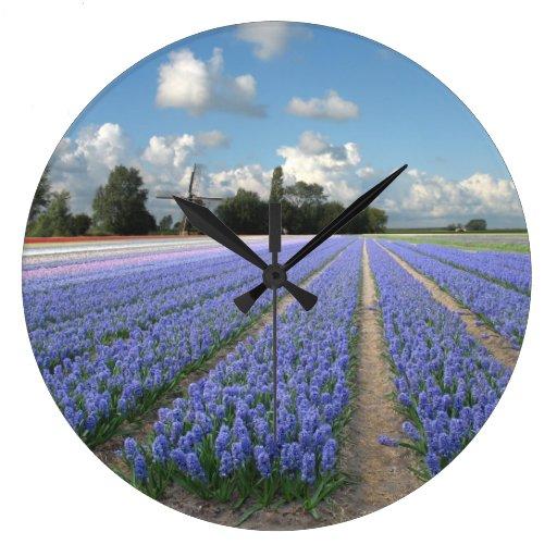 Jacintos azules en un campo Holanda Reloj