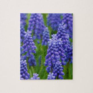 Jacintos de uva azules rompecabezas con fotos