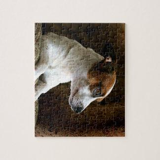 Jack de pensamiento Russell Terrier Rompecabezas Con Fotos