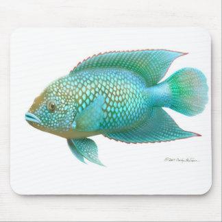 Jack Dempsey Cichlid Fish Mouse Pad