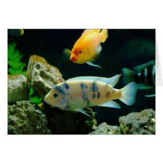 Jack Dempsey Fish... Card
