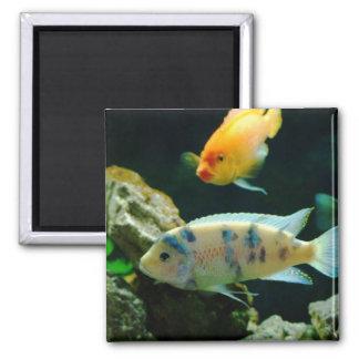 Jack Dempsey Fish Magnet... 2 Inch Square Magnet