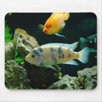 Jack Dempsey Fish... Mouse Pad