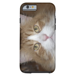 Jack domestic orange and white maine coon cat tough iPhone 6 case