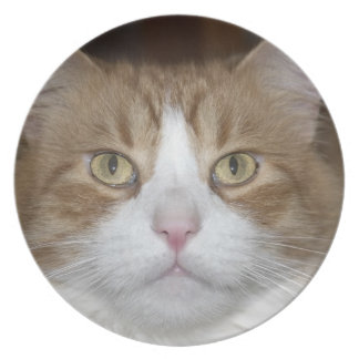Jack domestic orange and white maine coon cat melamine plate