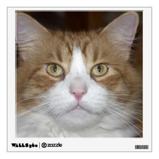 Jack domestic orange and white maine coon cat wall decal