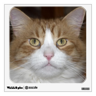 Jack domestic orange and white maine coon cat wall sticker