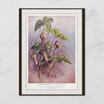 Jack-in-the-Pulpit Botanical Flower Postcard