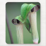 JACK-IN-THE-PULPIT Mousepad