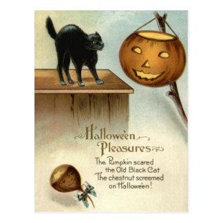 Jack O' Lantern Black Cat Chestnut Pumpkin Postcard