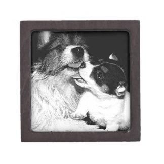 Jack Puppy Love Gift Box
