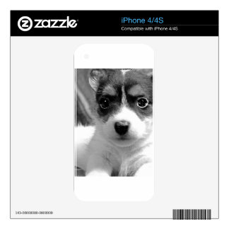 Jack Puppy Love iPhone 4S Skins