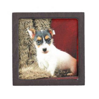 Jack Puppy Love Jewelry Box