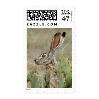 Jack Rabbit - Cactus - 2 - 2009 Postage