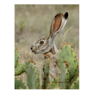 Jack Rabbit - Cactus - 2 - 2009 Postcard