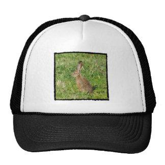 Jack Rabbit cap Trucker Hat