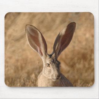 Jack rabbit with large ears photo mousepad