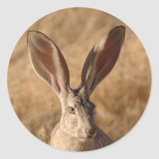 Jack rabbit with large ears photo stickers
