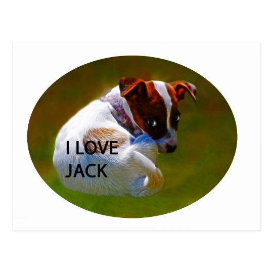 Jack Rusell Puppy Postcard