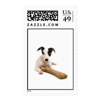 jack russel and his bones postage