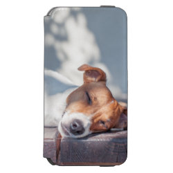 Jack Russel On Autumn Porch iPhone 6/6s Wallet Case