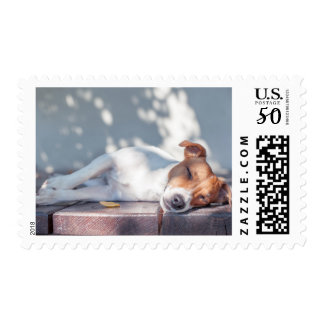 Jack Russel On Autumn Porch Postage
