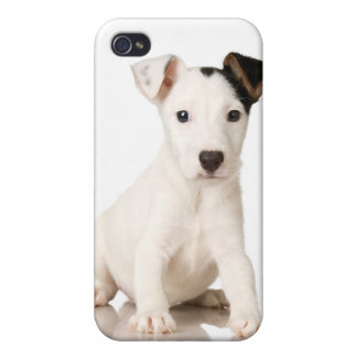 Jack Russel Puppy Photograph iPhone 4 Cases