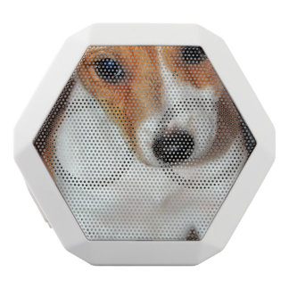 jack-russel-terrier-6 white boombot rex bluetooth speaker