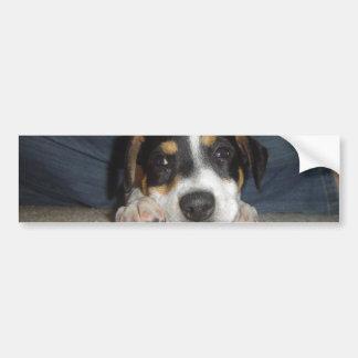 Jack russel terrier--cute car bumper sticker