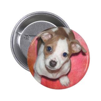 Jack Russel Terrier Puppy on Pink 2 Inch Round Button