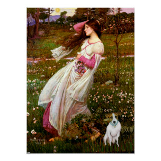 Jack Russell 10 - Windflowers Poster