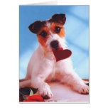Jack Russell A Special Kind Of Love Card