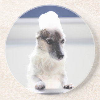 Jack Russell Bath Time Coaster